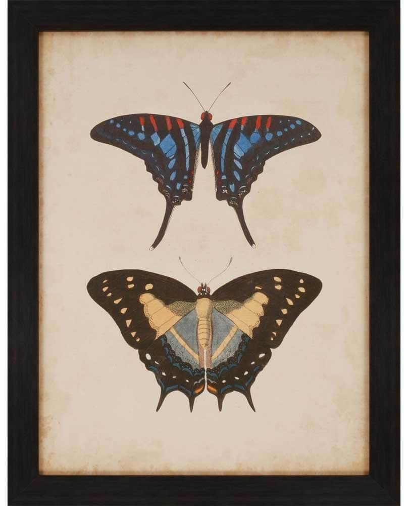 products antique butterfly iii framed wall art b 4742  69925.1488946282.1280.1280