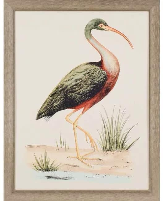 Category_WA_Birds-c